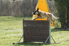 Dog sport Stock Photos