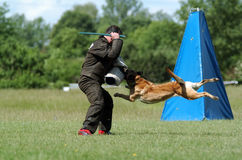 Dog sport Stock Image