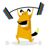 Dog Sporting with barbell. Pet pumping muscle. Fitness exercises. Weight lifting. Vector illustration with cute training dog Royalty Free Stock Image
