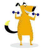 Dog Sporting with dumbbells. Dog pumping muscle. Dog Sporting with dumbbells. Pet pumping muscle. Fitness exercises. Weight lifting. Vector illustration with Stock Photo