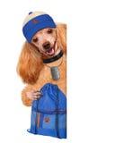 Dog sports Stock Photo