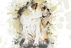 Dog, spray paint, painted. Drawing dog pencil, paints, splashes on white background Royalty Free Stock Photos
