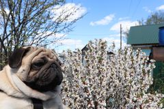 Dog spring stock images