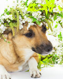 Dog and spring flowers Stock Image