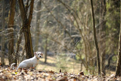 A dog in a spring forest Stock Photo