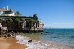 Dog spring på stranden på bakgrunden av huset Arkivfoton