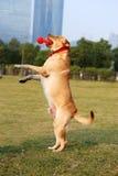 Dog standing Stock Photos