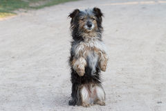 Dog standing Stock Photography