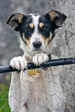 Dog standing against a wire fence Stock Photos