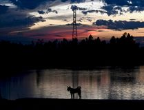 A dog is standing around a river bank area in the afternoon royalty free stock image