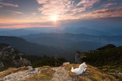 Dog standing on the background of mountain scenery Stock Images