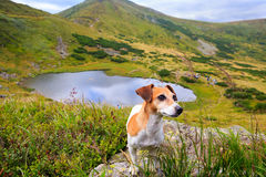 Dog standing on the background of mountain scenery Stock Photo