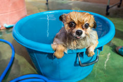 Dog standing bathtub Island Stock Photo