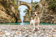Dog It is standing on the beach between the rocks in the gorge Royalty Free Stock Images