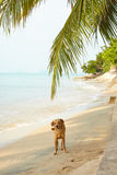 Dog standing on beach by seaside. Beautiful dog standing on beach by seaside, on sunny day under palm trees royalty free stock image