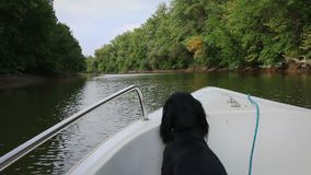 Dog standing on a boat on river, stabilized stock footage
