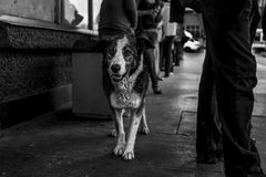 City dog in metro station royalty free stock images
