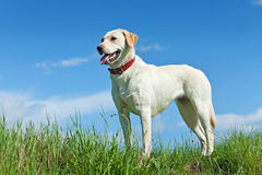 Dog standing on the field in springtime Royalty Free Stock Photo