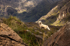 Dog standing between mountains Royalty Free Stock Photo