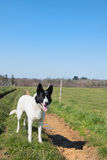 Dog standing in open landscape Royalty Free Stock Photo