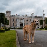 Dog standing outside castle stock images