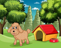 A dog standing outside his dog house Stock Photo