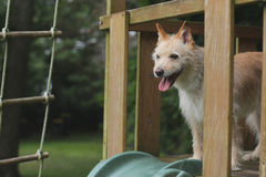 Dog standing in the playground. Dog stands happily at the slide in the playground outside Stock Photo