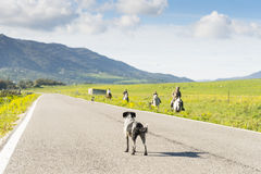 Dog standing in road Stock Photography