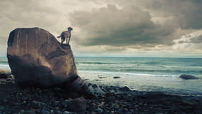 Dog standing on a rock and looking over the sea Stock Photography