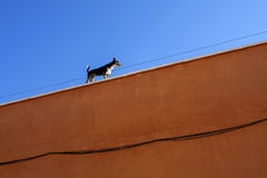 Dog standing at the roof of colorful building. Small dog standing at the roof of colorful building against blue sky stock images