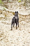 Dog standing on the sandy cliff. Rear view Royalty Free Stock Image