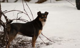 The dog is standing in the snow stock photos
