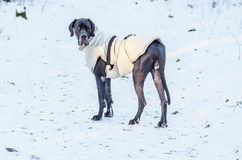 Dog standing on the snow Royalty Free Stock Image