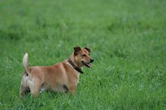 Dog Standing In Tall Grass Stock Photography
