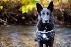 Dog standing and waiting a river Royalty Free Stock Photo