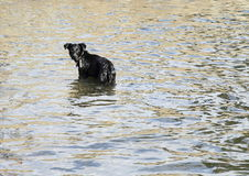 Dog standing in water Stock Photo