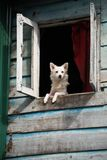 Dog standing in window and look out from home Royalty Free Stock Image