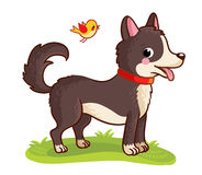 A dog stands in a meadow and chews grass. Vector illustration with cute animals in cartoon style Stock Photography