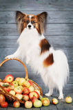 Dog stands near the basket Stock Photos