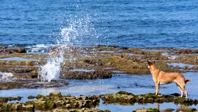 Dog startled by a splash royalty free stock photos