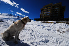Dog staring at building in snow Stock Images