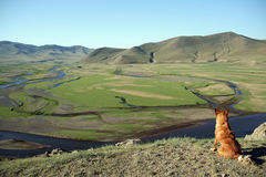 Dog staring at the river. Valley in mongolia near karkorin Stock Images