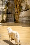 Dog staring at a waterfall in the desert royalty free stock images