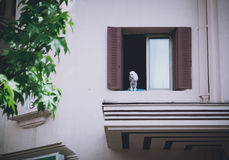 Dog staring at the window. White dog standing on the window staring the city Royalty Free Stock Image