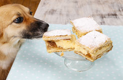 Dog stealing a cake Stock Images