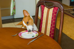 Dog steeling food. Home work of bad-mannered pets Royalty Free Stock Image