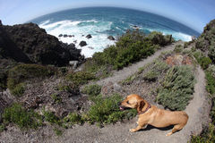 Dog and Steep Trail at Pacific Ocean Stock Images