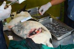 Dog sterilization Stock Photos