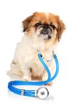 Dog and stethoscope. Stock Photos