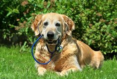 Dog with stethoscope stock photography